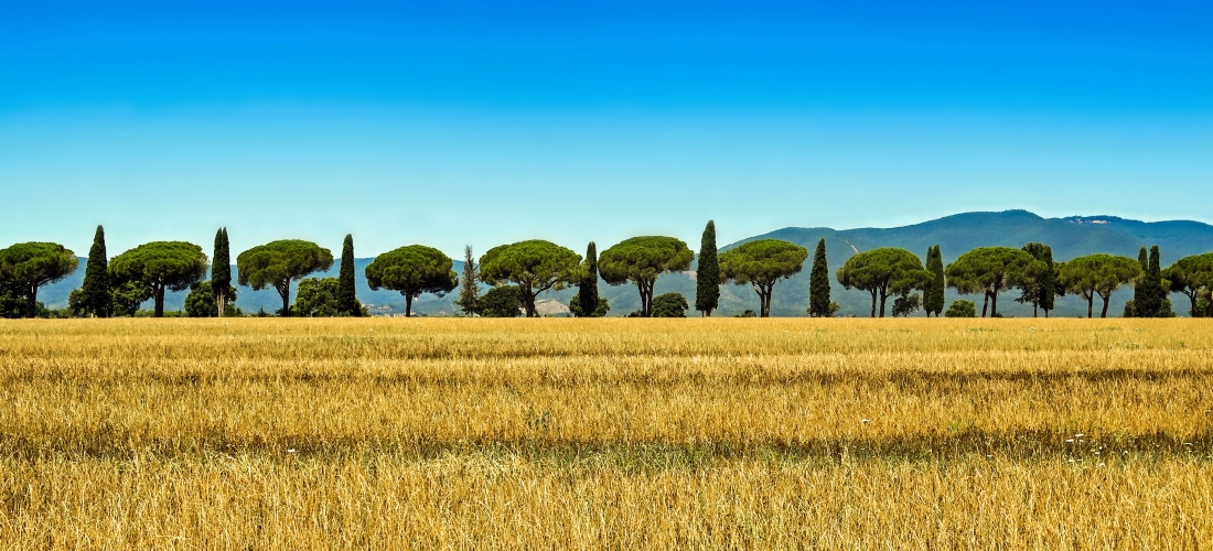 realmente-real-estate-toscana