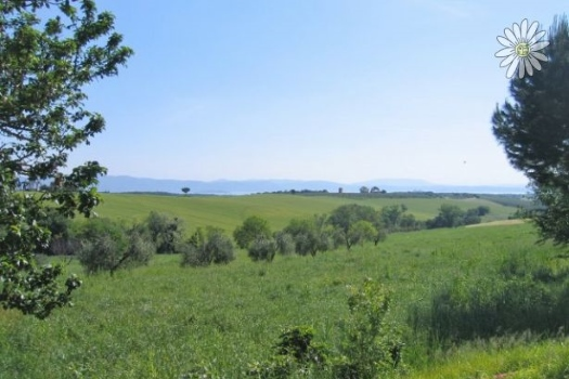realmente-realestate-cdl2023-appartement-castiglione-del-lago-umbria-italia-12