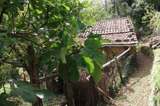 realmente-realestate-rr225-vrijstaand-huis-selva-di-santa-fiora-grosseto-toscana-italia-15